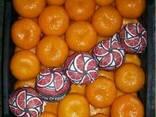 Mandarines Morket, фото 2