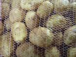 Картофель молодой - photo 2