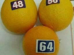 Mandarines Morket - фото 4