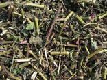 Medicinal herbs - photo 2